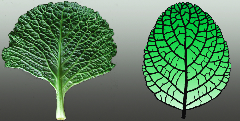Leaf-TreeCombo