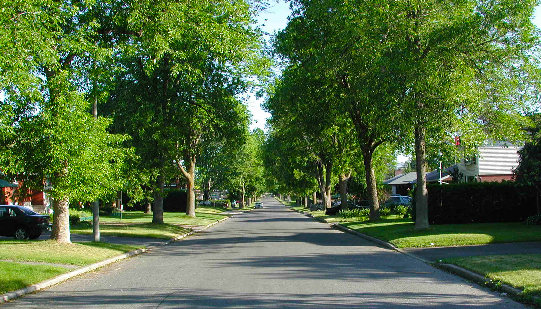 Trees add delight to the street but also value to properties